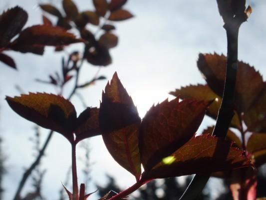 2012-03-11_0426_crop