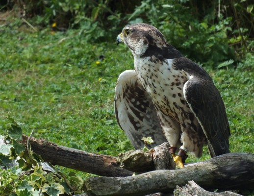 raptor_photography_day_032_3