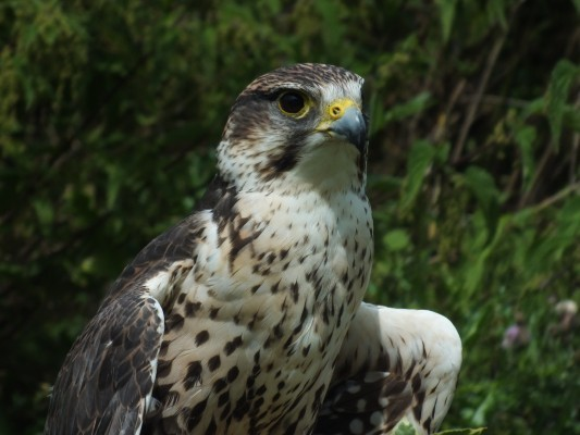 raptor_photography_day_033_0