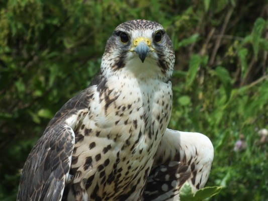 raptor_photography_day_034_0