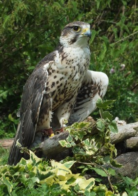 raptor_photography_day_036_0