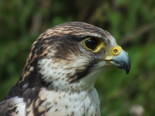 raptor_photography_day_040_0