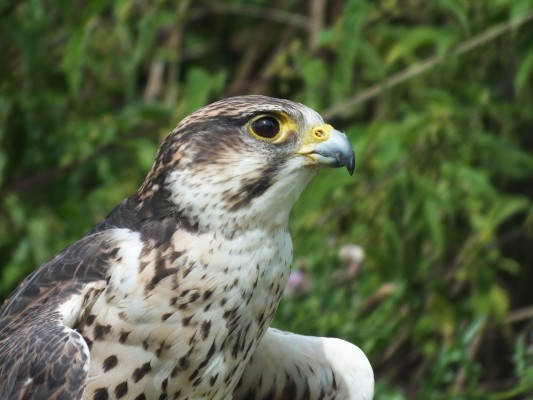 raptor_photography_day_042_0