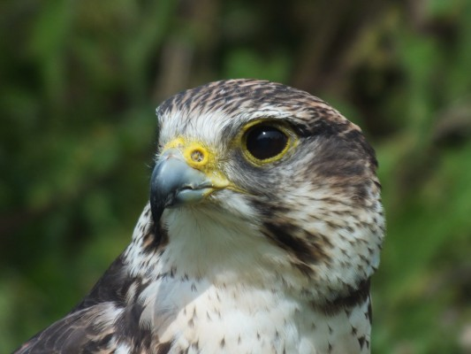 raptor_photography_day_043