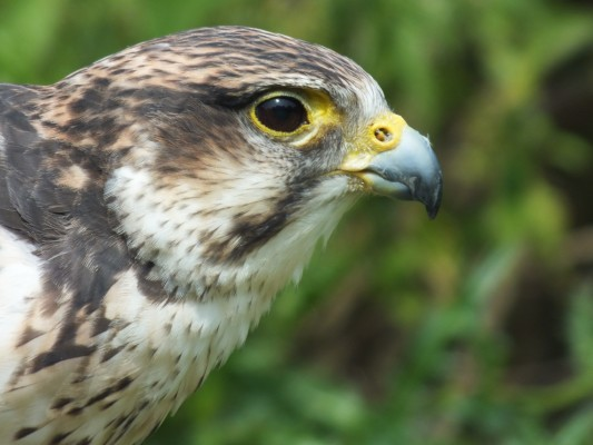 raptor_photography_day_046