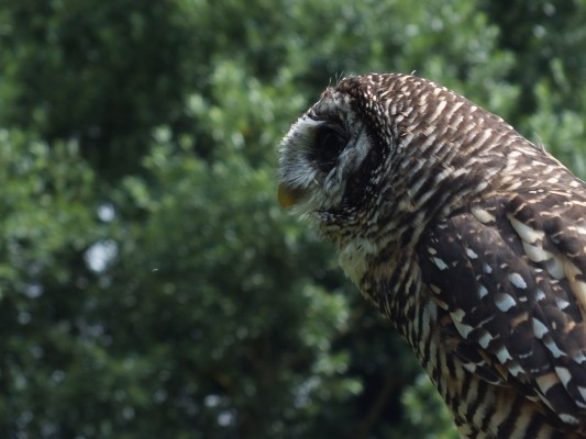 raptor_photography_day_086_0