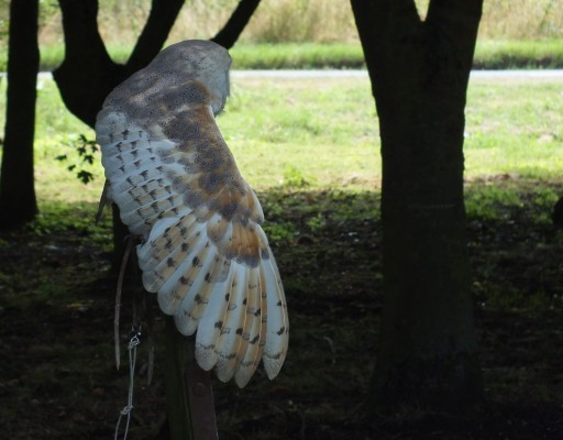 raptor_photography_day_130