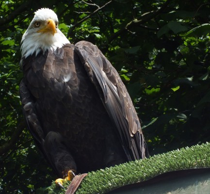 raptor_photography_day_174