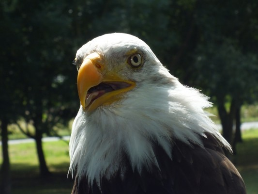 raptor_photography_day_205