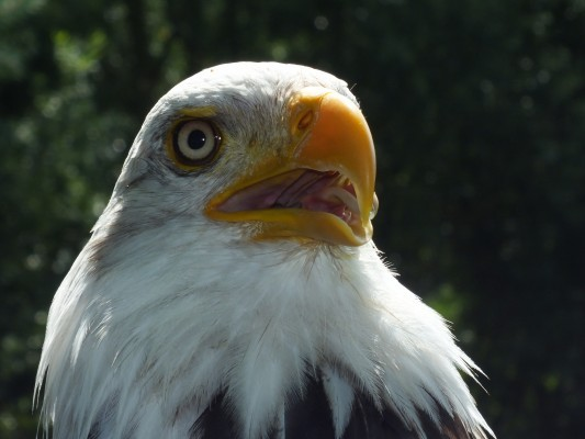 raptor_photography_day_209