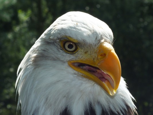 raptor_photography_day_210