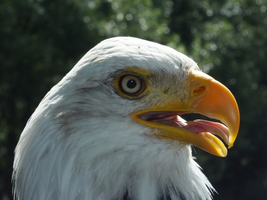 raptor_photography_day_212
