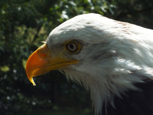 raptor_photography_day_218