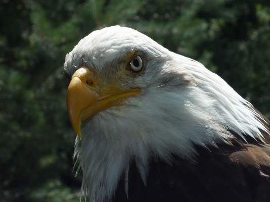 raptor_photography_day_221