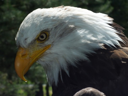 raptor_photography_day_225