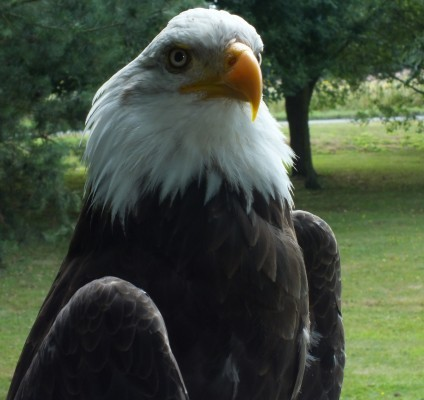raptor_photography_day_228