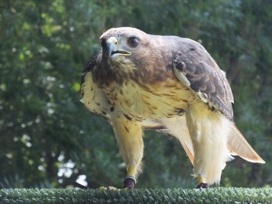 raptor_photography_day_263
