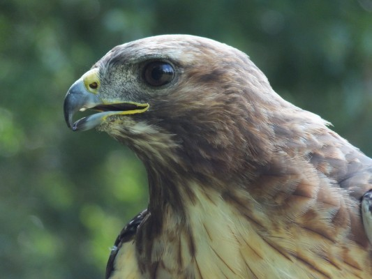 raptor_photography_day_267