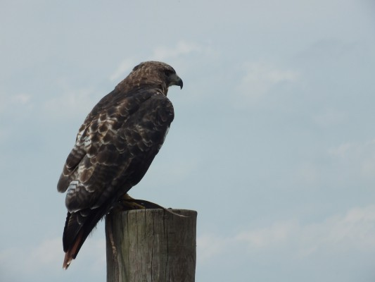 raptor_photography_day_299