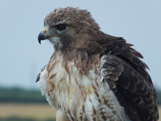 raptor_photography_day_305