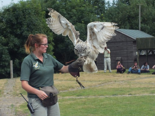 raptor_photography_day_335