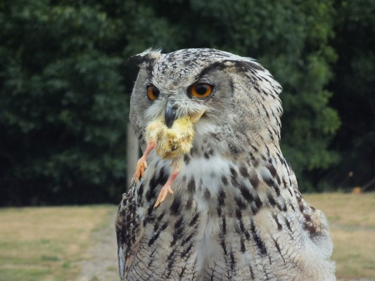 raptor_photography_day_340