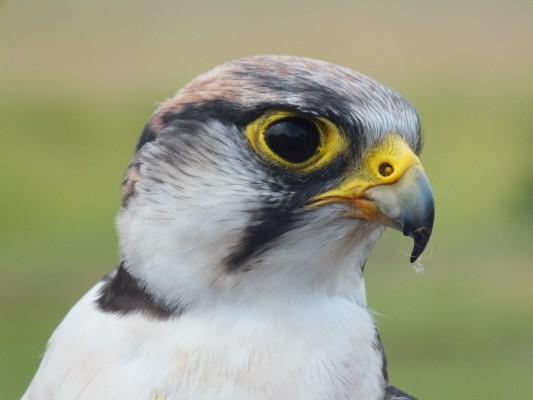 raptor_photography_day_368