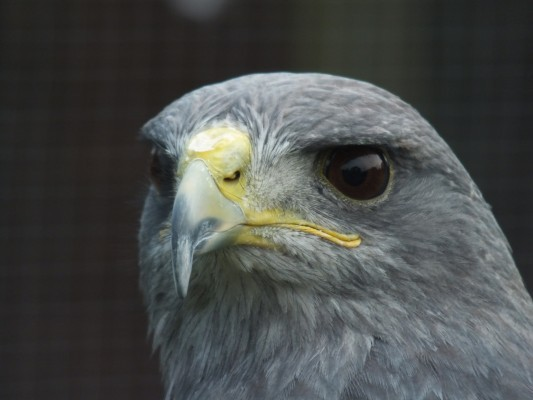 raptor_photography_day_411