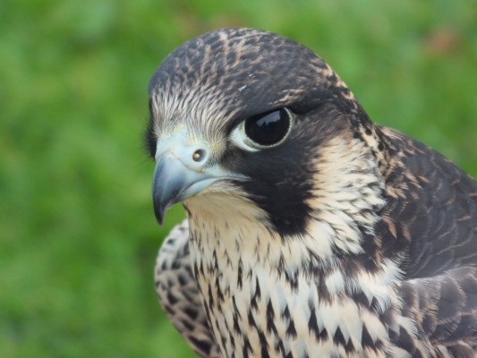 raptor_photography_day_418