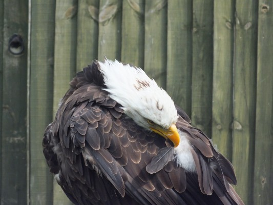 raptor_photography_day_448
